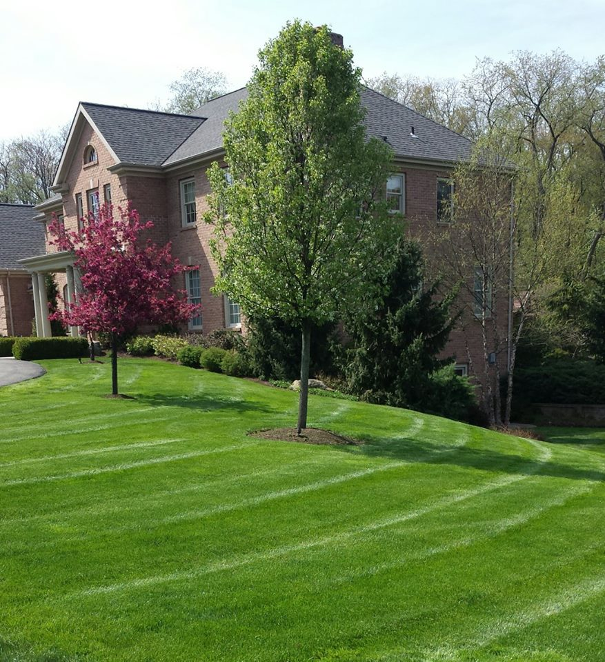 Lawn Service And Landscape: Fox Chapel Landscaping